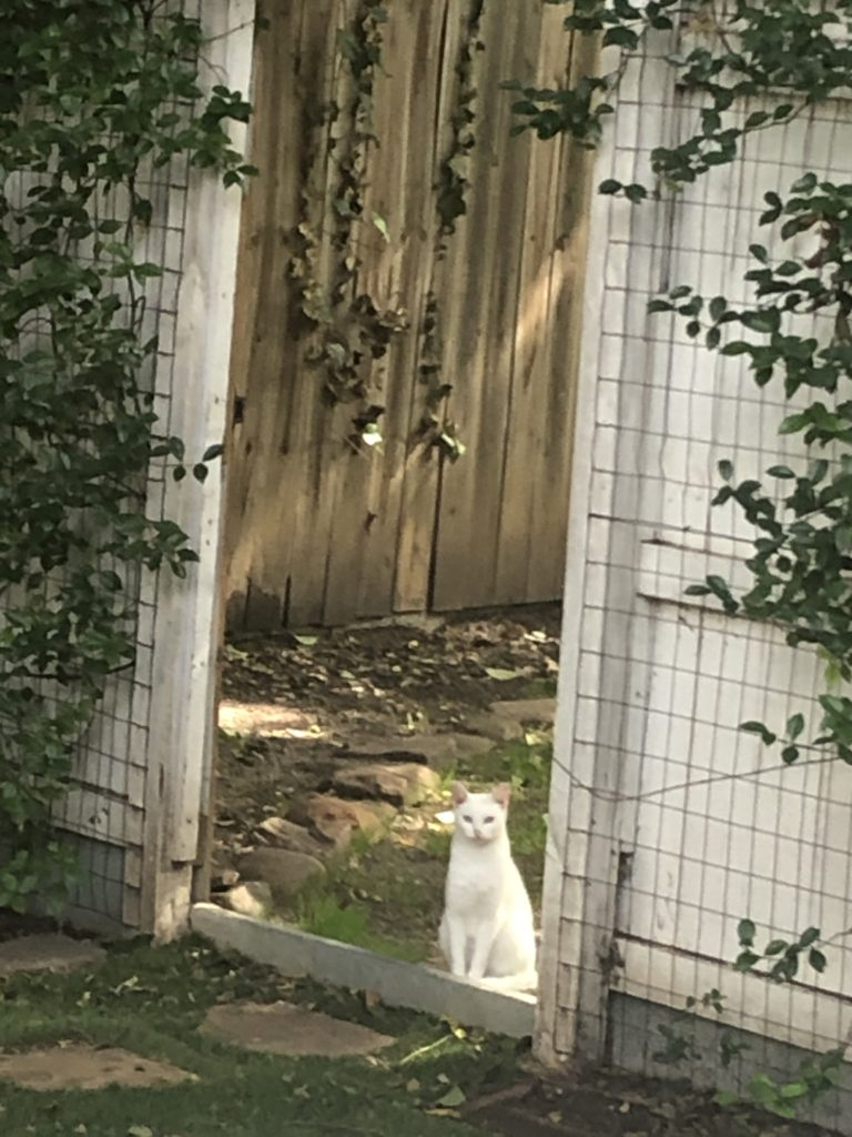 The Cat at the Gate